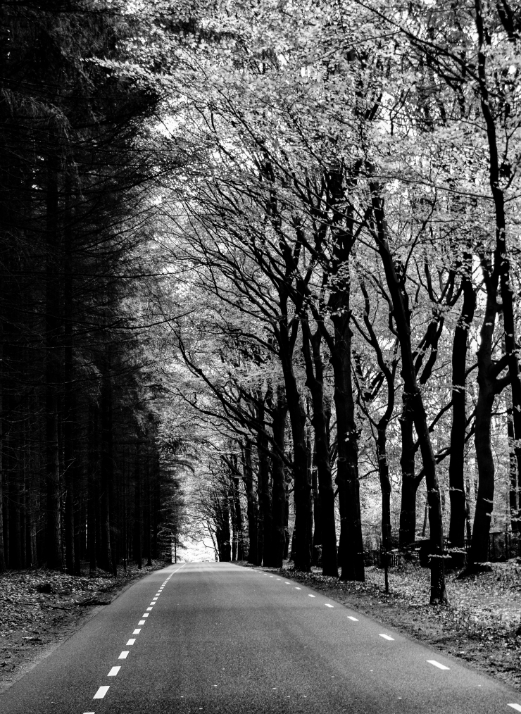 B&W photo taken close to De Hoge Veluwe National Park