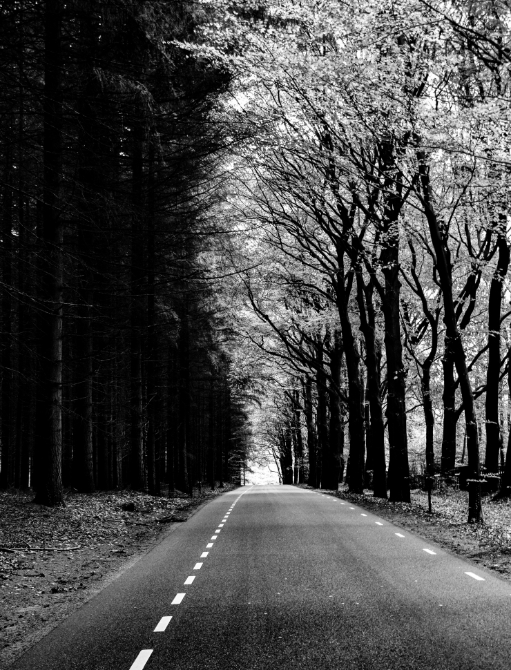 Bw photo taken close to de hoge veluwe national